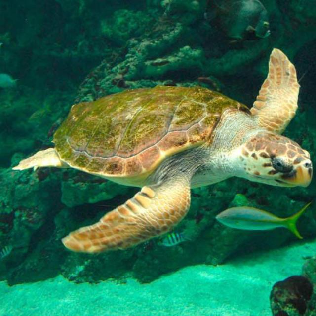 800x533-oceanopolis-brest-tortue.jpg