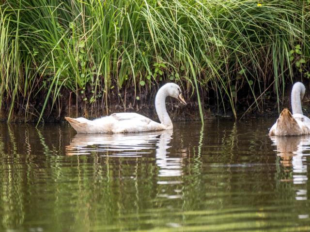 Apéro Oiseaux au cœur des marais de Brière