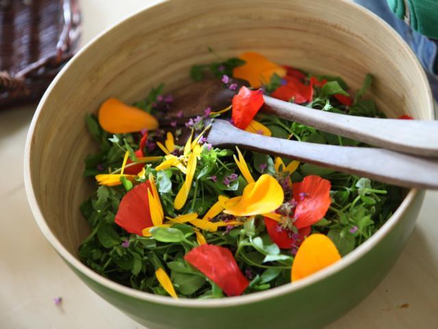 apprenez-reconnaitre-cuisiner-plantes-sauvages-12.jpg