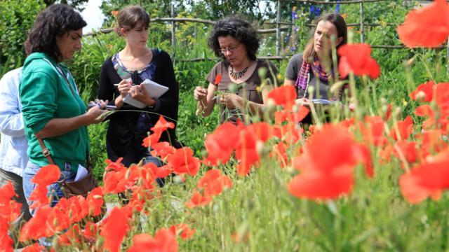 Apprenez à reconnaître et cuisiner les plantes sauvages