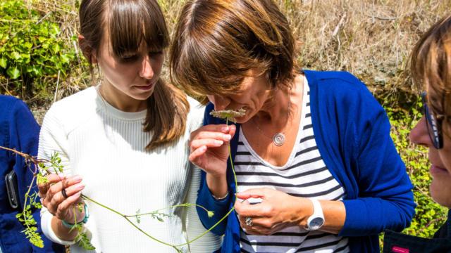 Confectionnez Vos Cosmétiques Naturels dans le Golfe du Morbihan