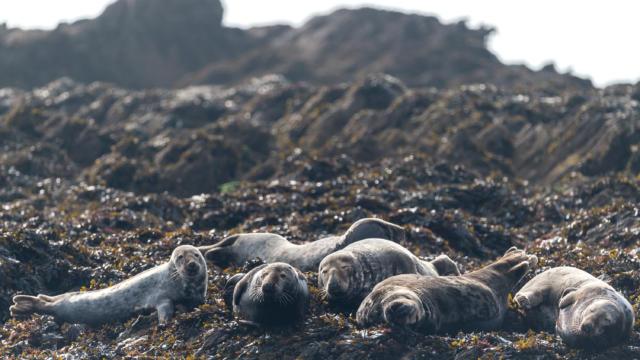 explorez-les-beautes-de-l-archipel-de-molene-13.jpg