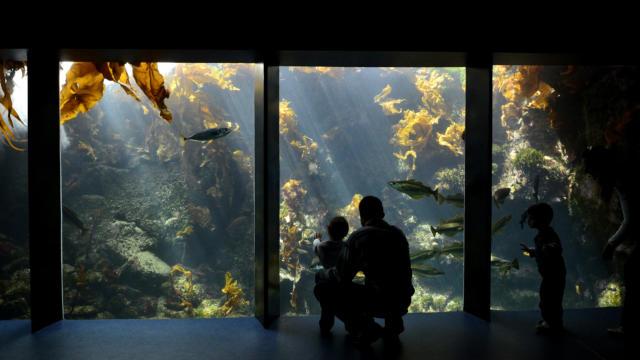 foret-laminaires-pavillon-bretagne-oceanopolis.jpg