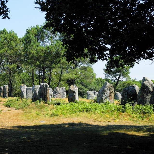 Mégalithes - Carnac