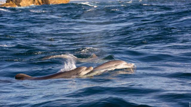 naviguez-aupres-des-dauphins-phares-et-oiseaux-11.jpg