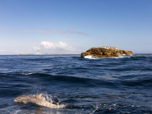 naviguez-aupres-des-dauphins-phares-et-oiseaux-5.jpg