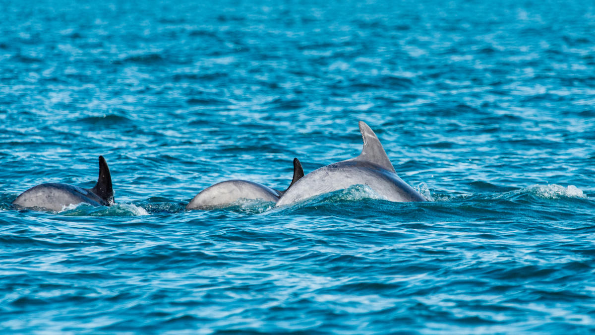 Join in and watch bottle-nosed dolphins