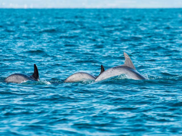 participez-a-l-observation-des-grands-dauphins-10.jpg