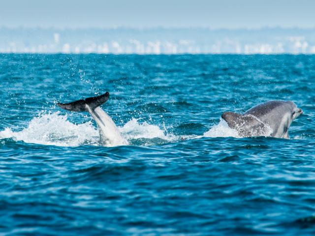 participez-a-l-observation-des-grands-dauphins-11.jpg