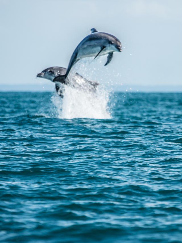 participez-a-l-observation-des-grands-dauphins-9.jpg