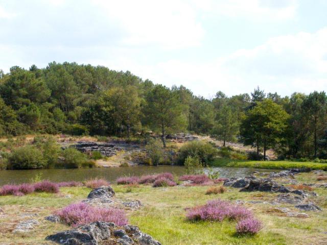 Réserve Naturelle Des Landes De Monténeuf