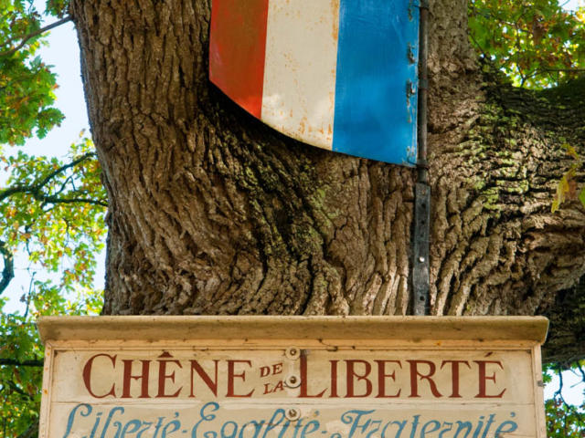 saint-christophe-de-valains-chene.jpg