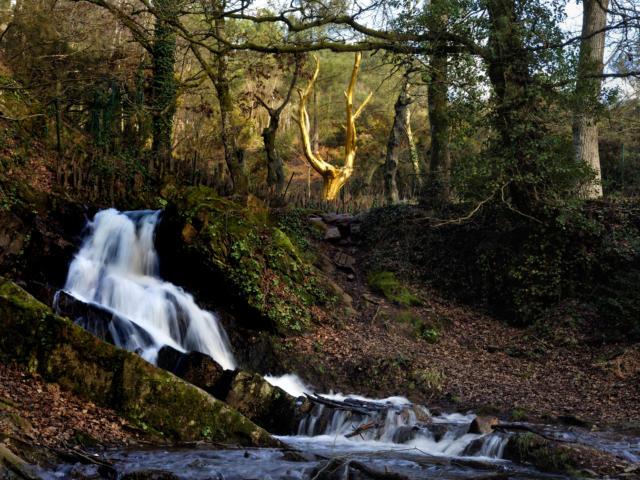 L'Arbre d'Or - Forêt de Brocéliande