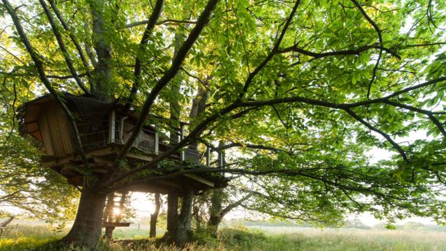 cabane-dans-les-arbres-2-berthier-emmanuel.jpg