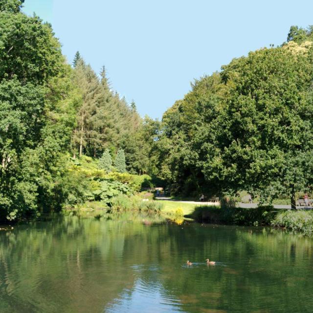 conservatoire-botanique-national-etang-sud-brest-charlotte-dissez.jpg
