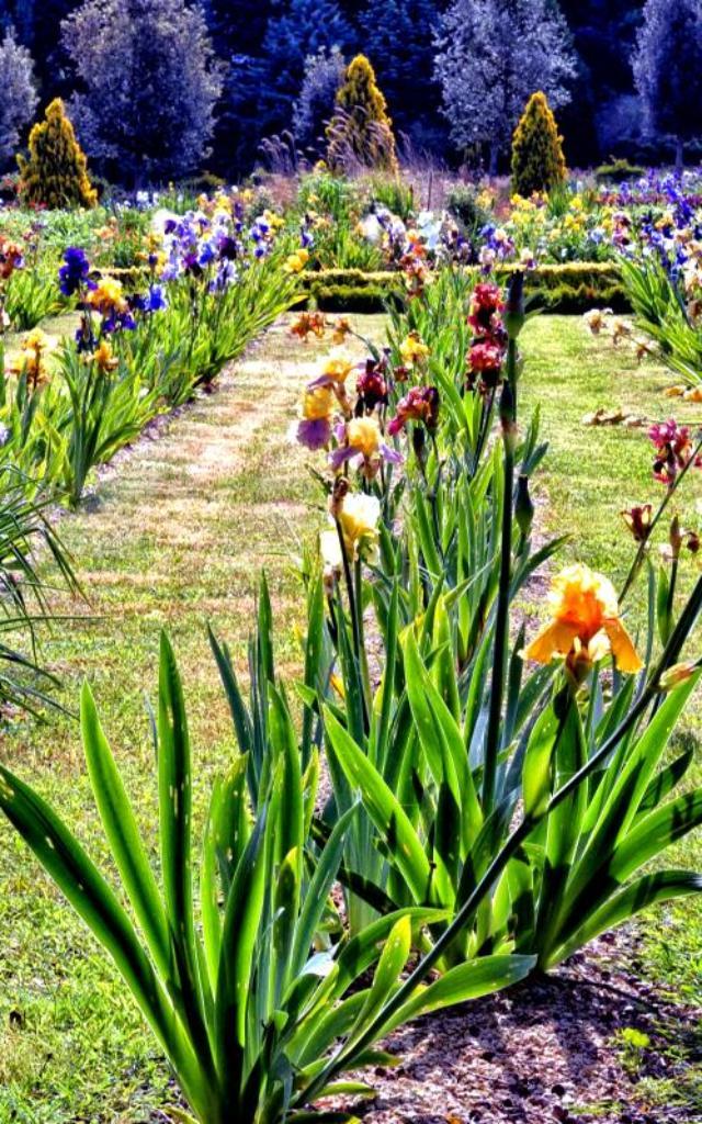 Jardinsde Brocliande  Jardin Sensoriel  Bral Sous