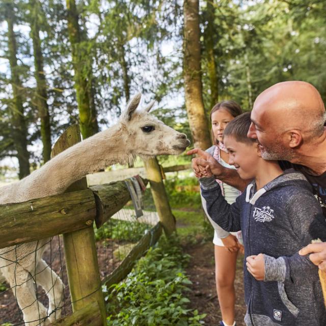 Parc animalier Chez Dame Nature à Meslan