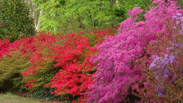 parc-botanique-de-cornouaille-combrit-2.jpg