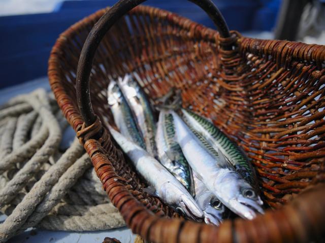 sardines-ronan-gladu.jpg