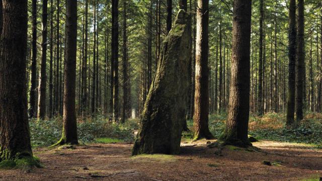 Menhir de l'Etoile, forêt de Camors