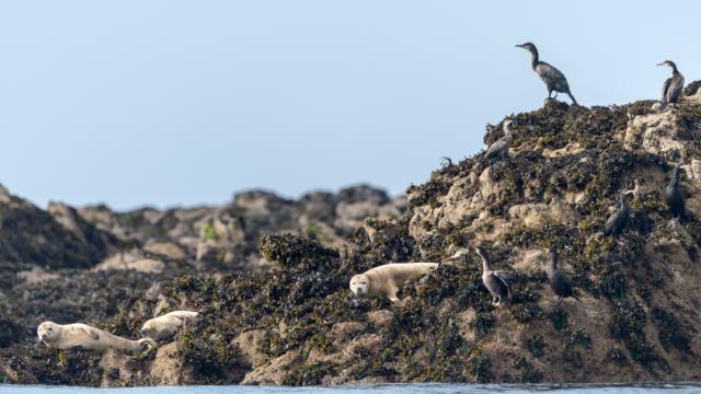 explorez-les-beautes-de-l-archipel-de-molene-1-berthier-emmanuel.jpg