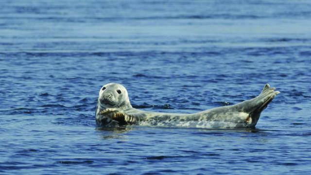 Rencontre avec un phoque - Côte Des Légendes