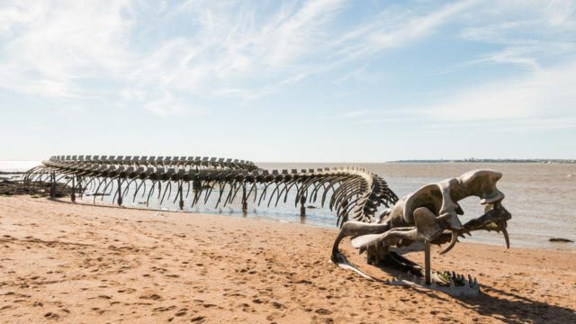 Serpent d'océan de Huang Yong Ping - Saint-Brévin-les-Pins