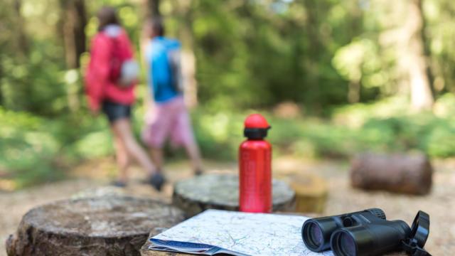 Randonnée dans la Forêt départementale d'Avaugour Bois Meur (22)