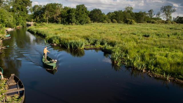 Balade sur l'eau en barque au parc de Brière