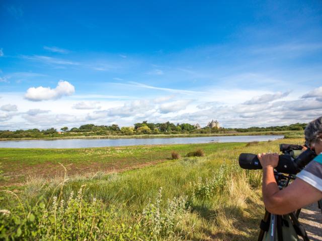 observer-les-oiseaux-dans-les-marais-du-golfe-du-morbihan-simon-bourcier.jpg