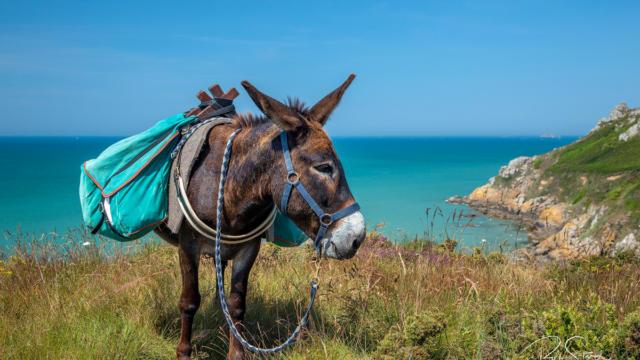 Randonnée avec un âne - Baie de Saint-Brieuc
