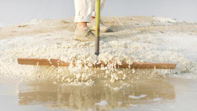 Extraction de sel dans les marais salants de Guérande