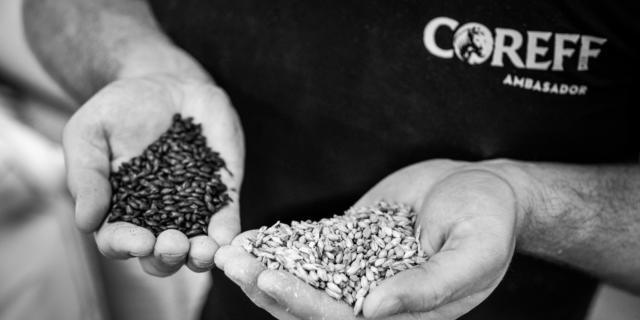 Choix des matières premières à la brasserie Coreff