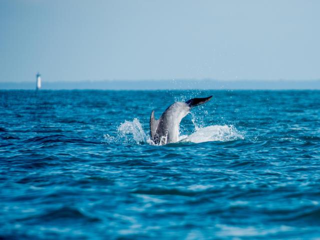 dauphins-molne-yannick-derennes.jpg