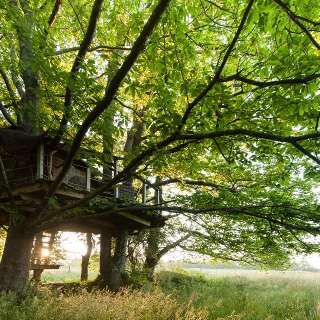 Ploemel, domaine de Dihan - hébergements insolites - cabanes dans les arbres.