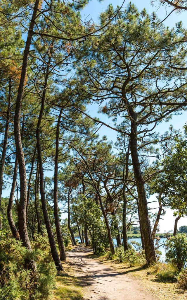 Pointe de Toulvern - Baden - Golfe du Morbihan