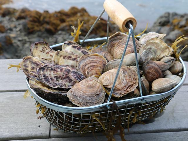 Huîtres - Panier du jardin marin - Paimpol