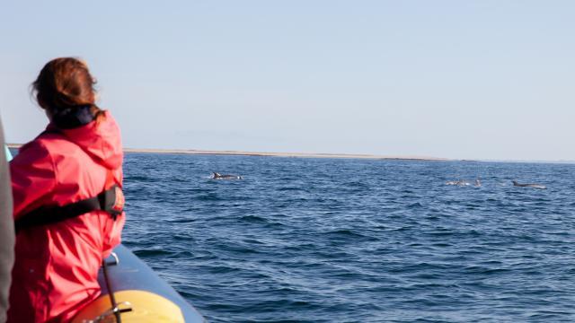 Sortie avec Archipel Excursion - dauphins en mer d'Iroise