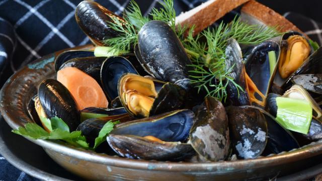 mussels-3148452-1920.jpg