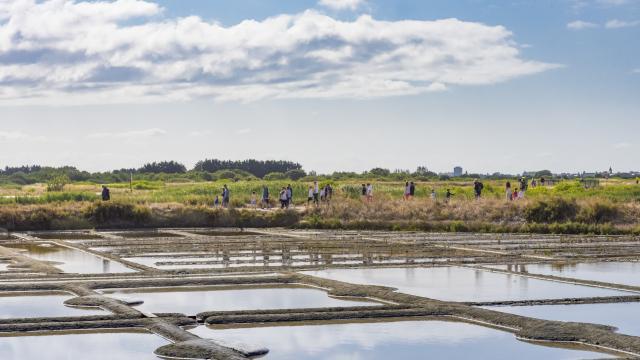 Marais Salants de Guérande - Terre de sel