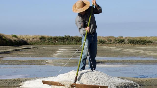 Marais Salants de Guérande - Terre de sel - Paludier