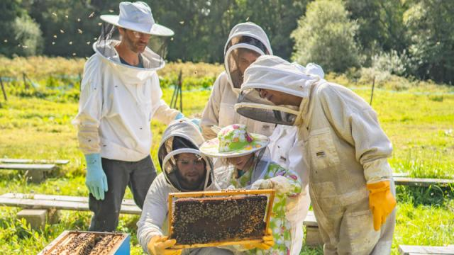 apiculture-la-fontaine-dairmeth-thibault-poriel.jpg