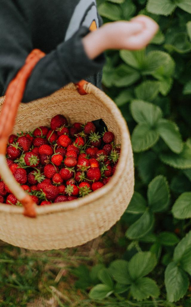 cueillette-fraises-enfant-daiga-ellaby-unsplash.jpg