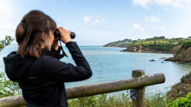 Hillion - réserve naturelle - Observation des oiseaux