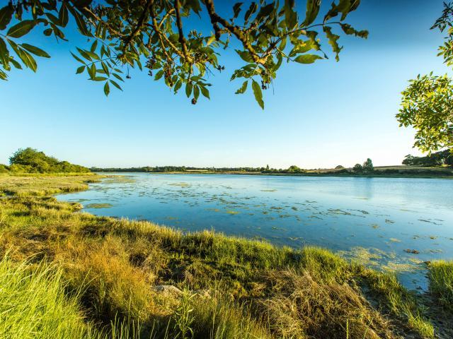 Séné - Les marais